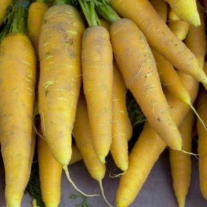 carottes jaune 2