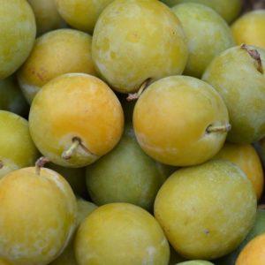reine claude prunes